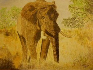 African Elephant resized
