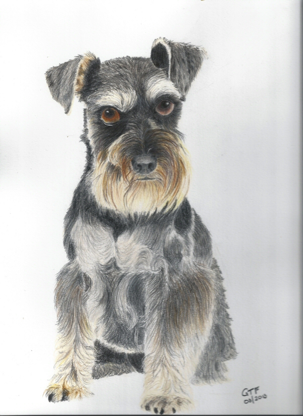 Minature Schnauser resized